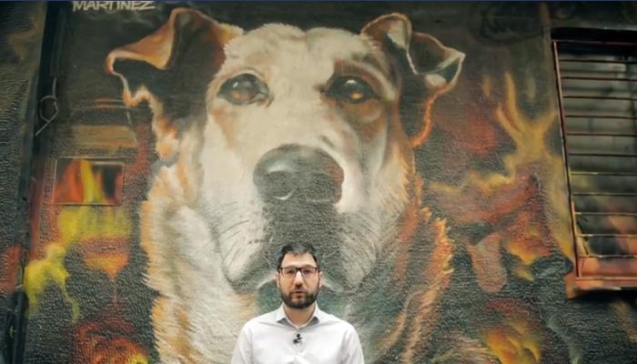 Αθήνα από την αρχή για τα ζώα συντροφιάς: 8+1 θέσεις