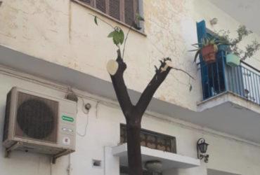 Η Ανοιχτή Πόλη για τις αναθέσεις σε ιδιώτες κρίσιμων υπηρεσιών πρασίνου του Δήμου Αθηναίων