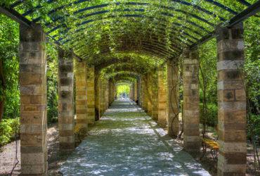 Ανακοίνωση της Ανοιχτής Πόλης για τη σύσταση της «Εθνικός Κήπος – Μητροπολιτικό Πράσινο ΑΕ»